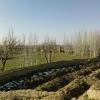 نمایی جالب از باغهای میلاجرد